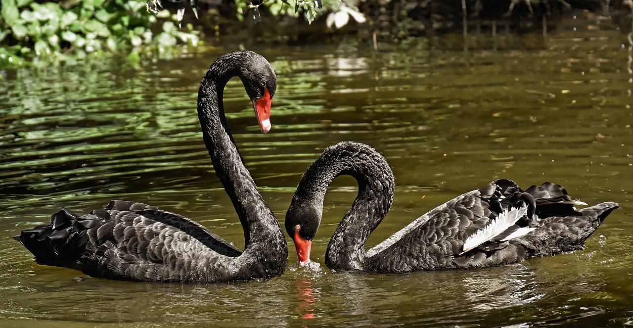Black swan financial events